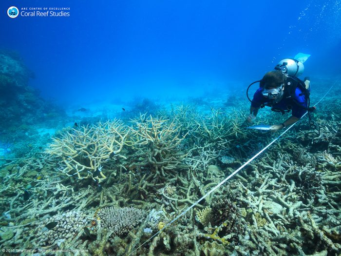 Scientists measure coral mortality following bleaching, northern Great Barrier Reef, October 2016 Credit: Tane Sinclair-Taylor