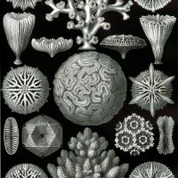 Adaptive strategies in scleractinian corals