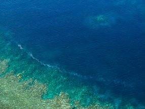 Two-thirds of Great Barrier Reef hit by back-to-back mass  coral bleaching