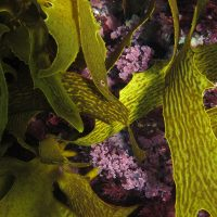 Reef-building algae adjusts internal chemistry in response to climate change