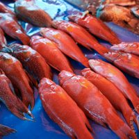 Effects of climate change on coral trout (Plectropomus spp.) and possible adaptation options