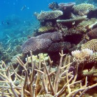 A brave new world for coral reefs