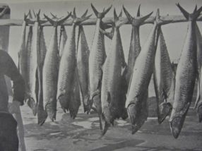 Fishery history highlights substantial declines