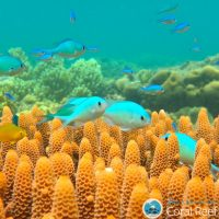 Risky business: exposure to oil impairs reef fish behaviour