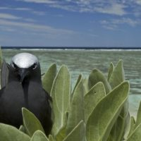 From wing to fin: seabirds enhance fish productivity on coral reefs