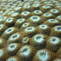 Deciphering the bacterial microworld in corals: structure, variability and persistence