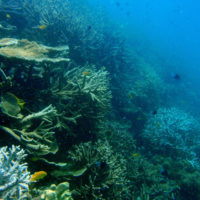 Isolated coral reefs not immune to local human activity
