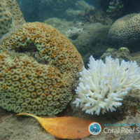 Can corals survive climate change?