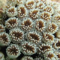 Potential acclimation of corals to future environmental conditions