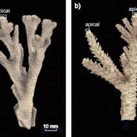 How will coral growth respond to man-made climate change under real-world conditions?