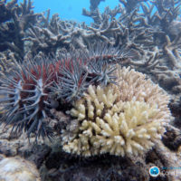 Taking stock of a thorny issue: 30 years of COTS research on the GBR