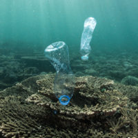 Plastics linked to disease in coral