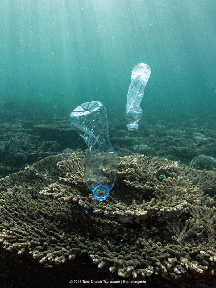Plastic pollution is found to significantly increase the chance of disease in corals. Credit: Tane Sinclair-Taylor @Tanetangaroa