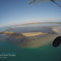 How does climate change impact coral reef critters? It's complicated