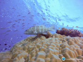 Study exposes misperception of poaching on the GBR and its remedy