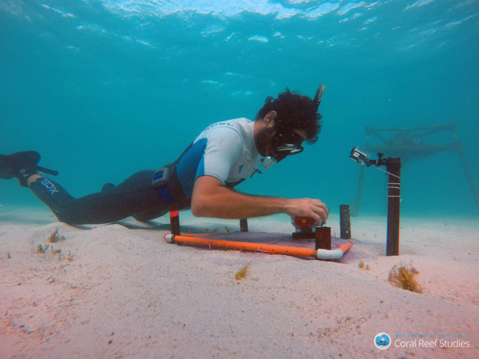 Dr Cuttler undertakes field research to collect in situ oceanographic measurements. Credit: ARC CoE for Coral Reef Studies/ Michael Cuttler