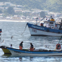Social-ecological research and marine governance transformations: Insights from small-scale fisheries in Chile