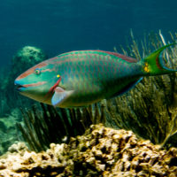 Study finds marine protected areas can help coral reefs
