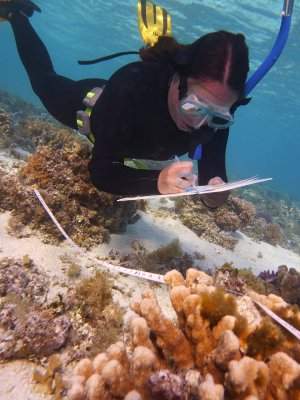 CoralCoE PhD candidate, Kristen Brown, investigating coral-algal interactions at Heron Island, southern Great Barrier Reef. Credit: UQ