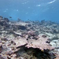 Coral reefs losing ability to keep pace with sea-level rise