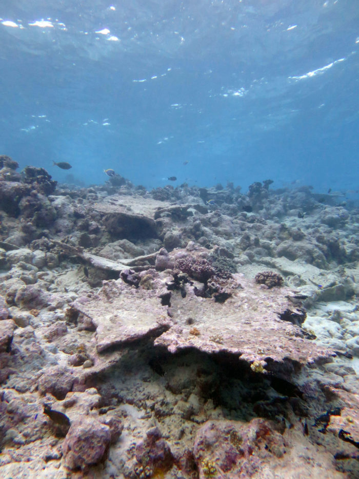 Dead and eroding section of reef in Chagos (Indian Ocean). Image taken after the bleaching event of 2016. Credit: Prof Chris Perry, University of Exeter