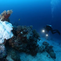 Coral bleaching on the Great Barrier Reef not limited to shallow depths