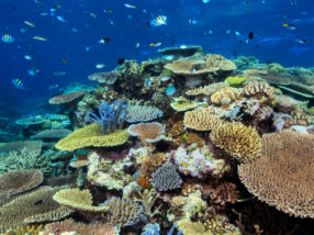 No silver bullet for the Great Barrier Reef