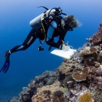 Coral reefs are in jeopardy but can still be saved