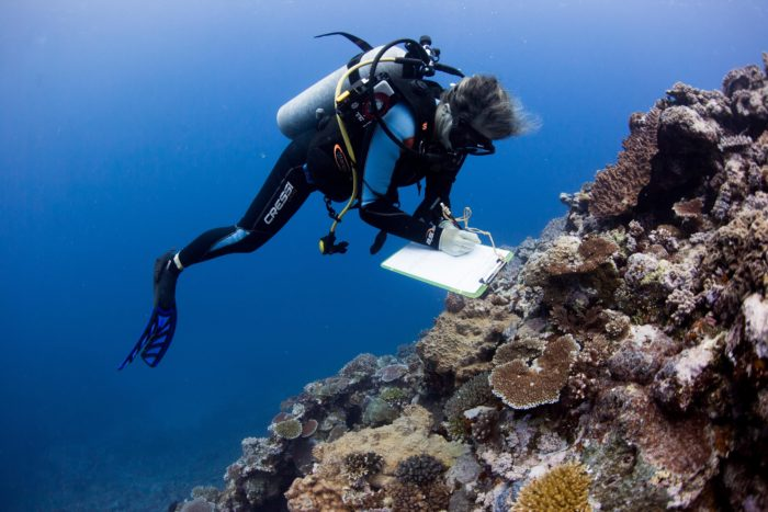 A marine scientist gathers data on coral reefs near Fiji for the largest coral study ever conducted. Credit: Emily Darling/WCS.
