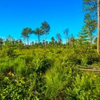 Multi-level governance and complex environmental change in Indonesia's tropical peatlands