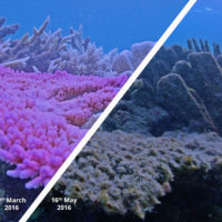 Marine heatwaves a bigger threat to coral reefs than previously thought