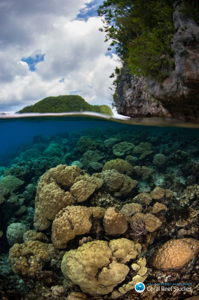 Climate change continues to threaten coral reefs and the futures of 400 million people who are dependent upon them. Credit: Mark Priest / ARC Centre of Excellence for Coral Reef Studies