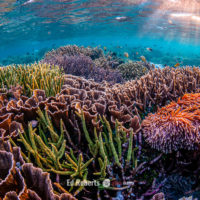 Coral study prompts rethink of classic scientific theory