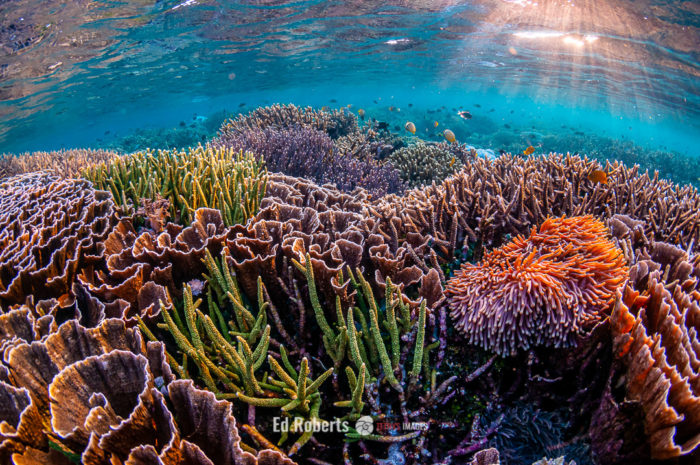 It turns out coral biodiversity on a reef isn't highest where classic scientific theory suggests it will be: in the shallowest waters, where more energy is available in the form of sunlight. Credit: Ed Roberts.