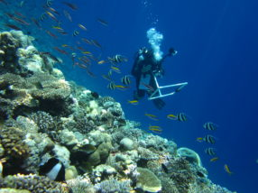 Top coral scientists named on prestigious 'highly cited' list
