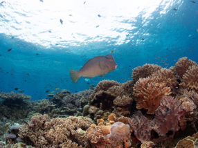 Unlocking the secrets of coral reef fisheries
