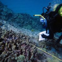 Coral disease risk factors revealed