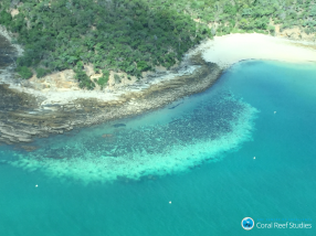 Climate change triggers Great Barrier Reef bleaching