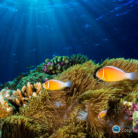 Watching coral reefs grow