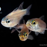 Fish in food systems; beyond protein, production and pessimism
