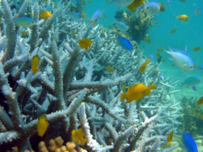 Boats & ships leave baby reef fish vulnerable to predators