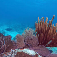 History repeats as coral reefs are devastated