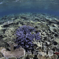 Project Phoenix: DNA unlocks a new understanding of coral