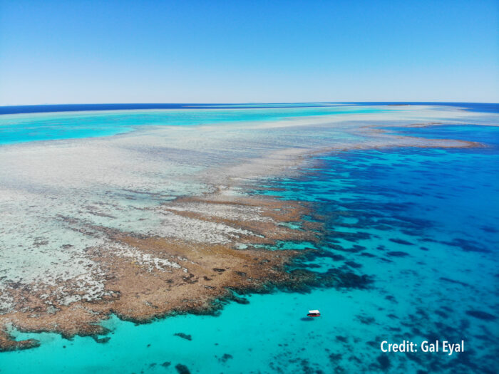 The assessment of Heron Reef reinforces the importance in using current, site-specific data to calculate biogenic net carbonate production, erosion, and dissolution. Image credit: Gal Eyal.