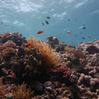 The Great Barrier Reef has lost half its corals