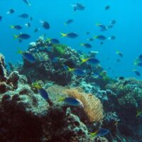 Ocean acidification on the Great Barrier Reef: the future is now