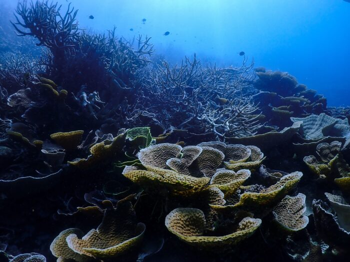 The study mapped the the ancient history of the Great Barrier Reef, back some one million years, to when inshore corals from Magnetic Island first diverged from their northern reef kin. Image: Kristen Hoel/Unsplash.