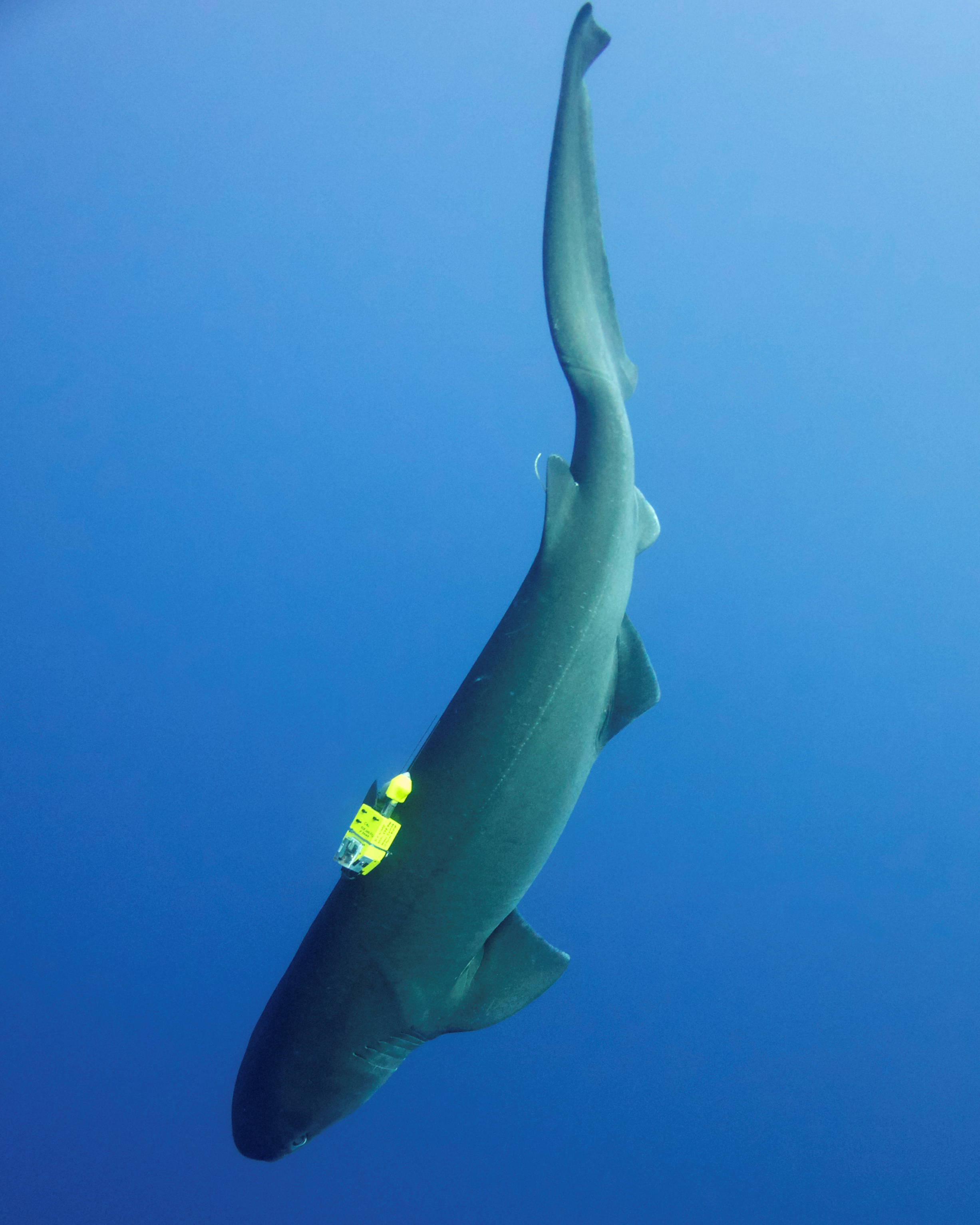 The secret lives of marine top predators: advances in biotelemetry link ecology and physiology to inform management