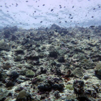 Coasts drown as coral reefs collapse under warming & acidification