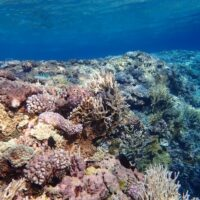 Adaptive seascapes: environmental and genetic drivers of heat tolerance in corals